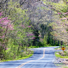 Country Road by Leah Zisserson - Landscapes Travel ( dogwood, redbud, trees, virginia, road, spring, country,  )