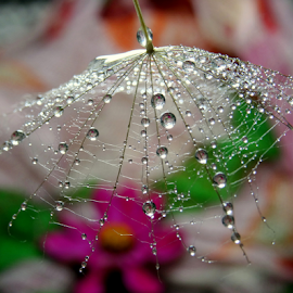 by Biljana Nikolic - Nature Up Close Natural Waterdrops