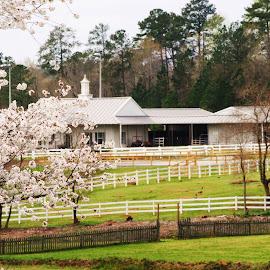 Equestian Facility by Prentiss Findlay - City,  Street & Park  Vistas ( horseriding, college horse center, horsecenter, collegeequestrian, equestrian )