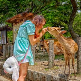 Feeding Time by Ferdinand Ludo - People Street & Candids ( nara deer park, lady feeds, osaka japan, deer )