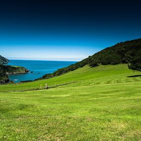 Lovely Devon by Matt Cooper - Landscapes Prairies, Meadows & Fields ( uk, england, sky, tree, blue, green, sea, lusk, sun, coast )
