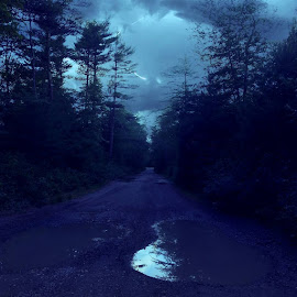 by Robert Lopes - Landscapes Forests