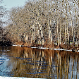 River Sentries by Kathy Woods Booth - Landscapes Forests ( reflection, icy, winter, ice, reflections, trees, tree trunk, river,  )