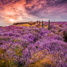 Flower Hill by Elaine Chong - Landscapes Sunsets & Sunrises
