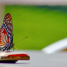 Butterfly On Nokia C2 by Adi Suda - Animals Insects & Spiders