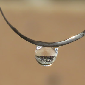 by Geraldine Angove - Nature Up Close Natural Waterdrops