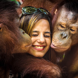 orangutan by Durai Rammamoorthi - Animals Other ( bangkok, kiss, safari wrold, girl, orangutan )