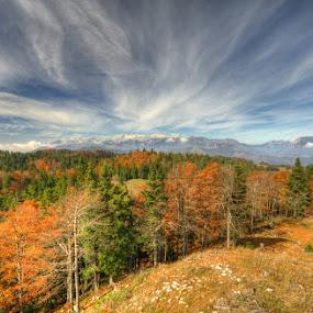 by Boštjan Peterka - Landscapes Forests