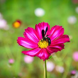 Ong và hoa by Vu Manh Hung - Flowers Single Flower