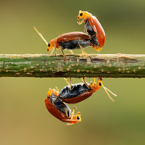 by Repindo Nasution - Animals Insects & Spiders ( bug )