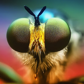 by Setiady Wijaya - Animals Insects & Spiders