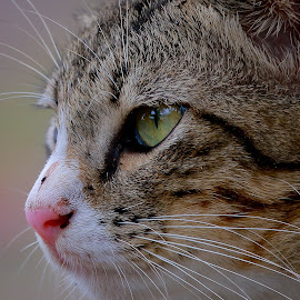 by Simon Yue - Animals - Cats Portraits