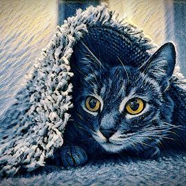 Being Fred  by Todd Reynolds - Digital Art Animals