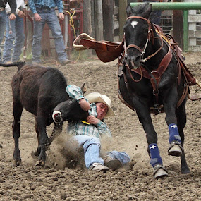 Bulldogging  by Brian Robinson - Sports & Fitness Rodeo/Bull Riding