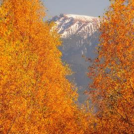 Autumn fire by Emil Zaman - Landscapes Mountains & Hills ( orange, mountains, seasons, leaves, snow, autumn )