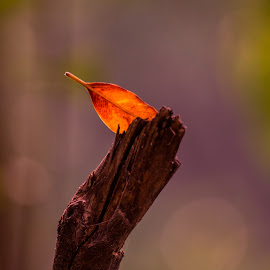 Fallen Leaf by Naveen Joyous - Nature Up Close Leaves & Grasses ( tree, nature, leaf, fallen leaves, close up )
