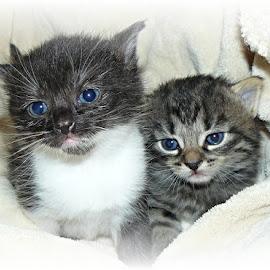 čertík a mourek by Jitka Rosslerová - Animals - Cats Kittens ( kotě,  )