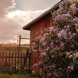 Beauty In A Day by Nancy Senchak - Landscapes Prairies, Meadows & Fields