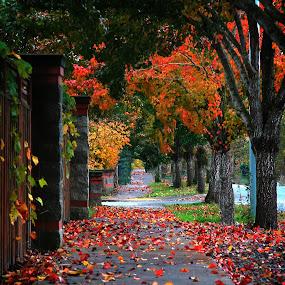 by Todd Klingler - City,  Street & Park  Neighborhoods (  )