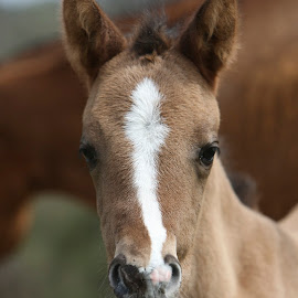 Little One by Mike Craig - Animals Horses