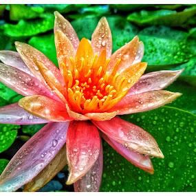 Flowers and drops!!! by Debamalya Dasgupta - Flowers Single Flower ( #livingstilllife#flowers#photooftheday, #natgeo#flowerphotography,  )