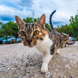 Curiosity by Ionut Olaru - Animals - Cats Portraits ( holiday, cat, curious, curiosity, travel )