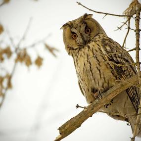 I'm watching you by Cristina Gusatu - Animals Birds