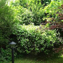 my garden in springtime by Patrizia Emiliani - Nature Up Close Gardens & Produce ( my garden, springtime,  )