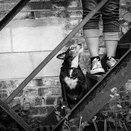 Adoration by Jen St. Louis - Animals - Dogs Portraits ( small dog, black dog, black and white, dog,  )