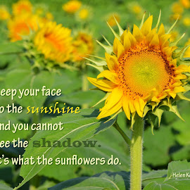 Keep Your Face To The Sunshine by Shannon Maltbie-Davis - Typography Captioned Photos