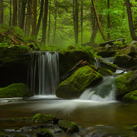 Spring by Clare Kaczmarek - Landscapes Waterscapes ( forests, waterfalls, westmoreland county, streams, laurel highlands )