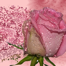 pink rose by LADOCKi Elvira - Digital Art Things ( nature, flowers, garden )