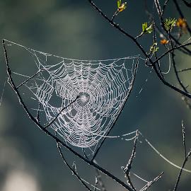 by Stanley P. - Nature Up Close Webs (  )