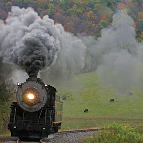 Train Passing Cows by Vicki Pardoe - Transportation Trains ( cumberland, steam train, fall, cows, mountain thunder )