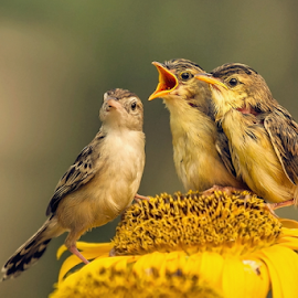 Cute Birds by MazLoy Husada - Animals Birds