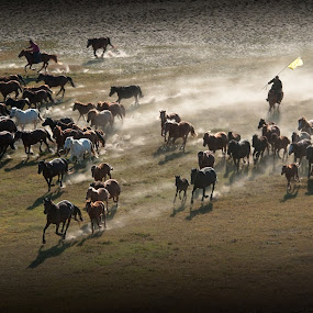 Horse chase! by Hai Poh Lee - Animals Other ( horse )