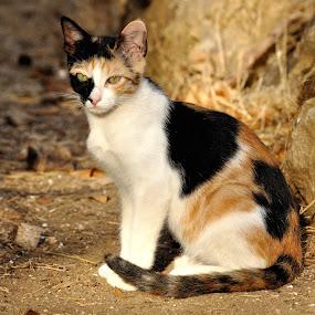 Mixa. by Lorraine Bettex - Animals - Cats Portraits