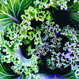 Curled Up in Spirals by Amir Mondal - Nature Up Close Gardens & Produce (  )