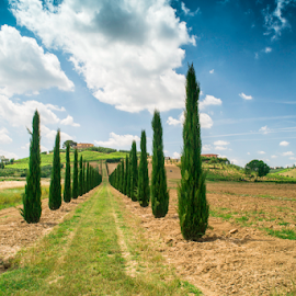 Vineyards and farm road in Italy by Deyan Georgiev - Landscapes Travel ( countryside, vineyard, europe, italian, tuscany, land, farmhouse, farmland, travel, road, house, landscape, olive, farm, sky, villa, tree, nature, grape, idyllic, cypress, italy, winery, hill, umbria, green, vine, agriculture, scenic, rural, country, field, chianti, european, florence, sunset, meadow, scene, summer, sunrise, view, tuscan, culture )
