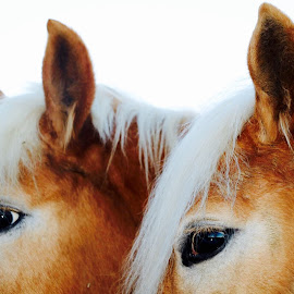 by Lu  Yo - Animals Horses