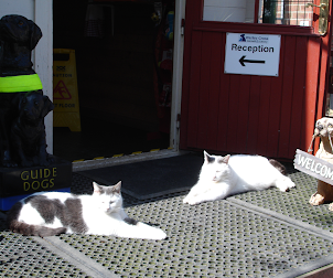Cats on Reception Duty at Warley Cross Cattery, Near Brandesburton, Beverley.