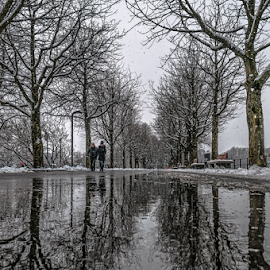 By the brandches! by Jesus Giraldo - City,  Street & Park  Street Scenes ( water, reflection, winter, street, trees, walk )