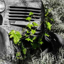 Trapped by Leslie Heisey - Novices Only Objects & Still Life ( old, truck, black and white, forgotten, abandoned )