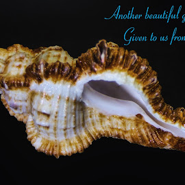 Peaceful Shell by Dave Walters - Typography Captioned Photos ( nature up close, sea shells, lumix fz2500, colors )