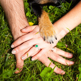 High Fours by Jessica Oberlin - Animals - Dogs Playing ( love, hand, family, paw, pawprint, dog )