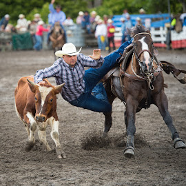 by Anthony Gillard - Sports & Fitness Rodeo/Bull Riding ( cowboy, animal sports, steer wrestling, horse, rodeo,  )