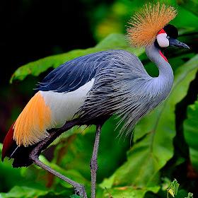 zoo bird processed Aug 15.jpg