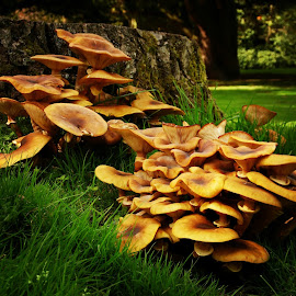 Yorkshire Sculpture Park by Rachel Jones - Nature Up Close Mushrooms & Fungi