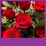 Roses Live Wallpapers Icon