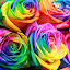 Multicolored roses by Opreanu Roberto Sorin - Flowers Flower Arangements ( plant, gift, rose flower, colorful, bright, joy, vivid, vibrant, yellow, valentine, spring, blossom, multicolored, love, pride, decor, macro, fresh, happy, colored, multiple, closeup, flower, petal, orange, flora, decoration, green, beautiful, romantic, multicolor, roses bouquet, rose, magic, blue, color, gay, background, summer, gardening, rainbow colors, celebration, rainbow, floral,  )